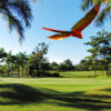 A view of a Red Macaw flying over a green at Los Delfines Golf & Country Club